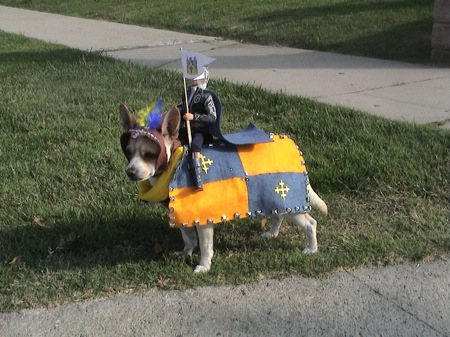 dog-in-horse-and-rider-costume