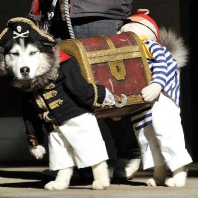 Dogs-Wearing-Costumes-1